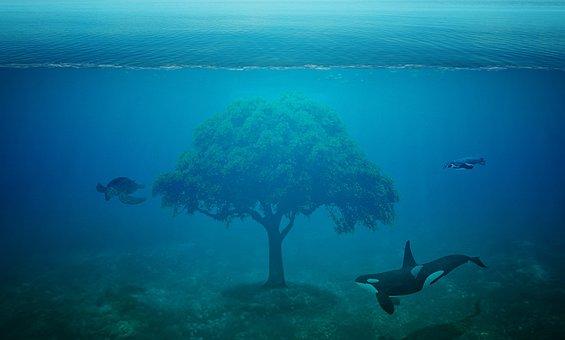 Ocean, Tree, Fantasy, Orca, Killer Whale, Turtle