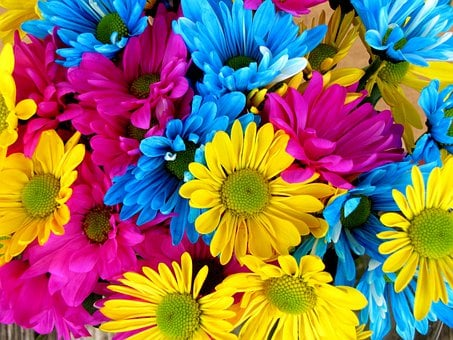 Daisies, Daisy, Flowers, Bloom, Colorful, Petals
