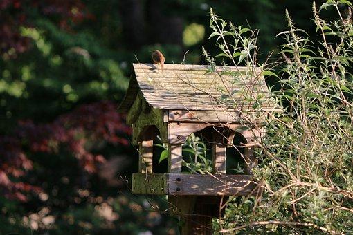 Bird, Birdhouse, Backyard, Nature, Nest, Box, Wood