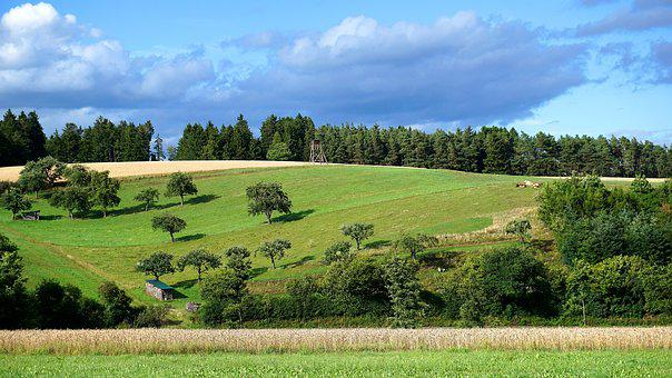 Landscape, Agriculture, Cows, Forest, Trees, Reported
