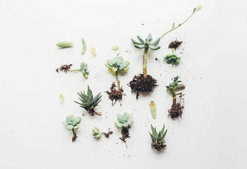Flower, Plant, Nature, Roots, Soil