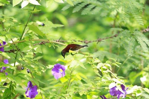 Flowers, Tree, Plant, Leaf, Summer, Natural, Branch