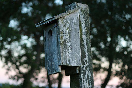 Birdhouse, Vintage, Nature, Bird, House, Wooden, Box