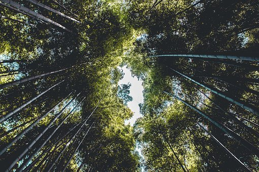 Sky, Bamboo, Trees, Plants, Nature