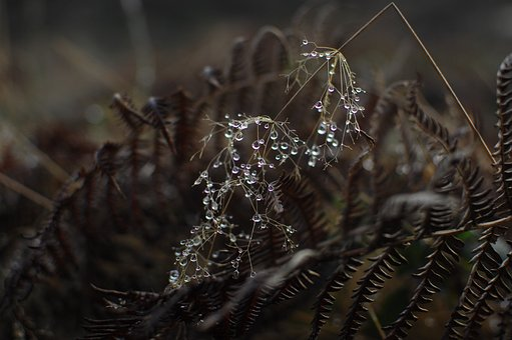 Dry, Drought, Leaf, Plant, Outdoor, Grass, Wet, Rain