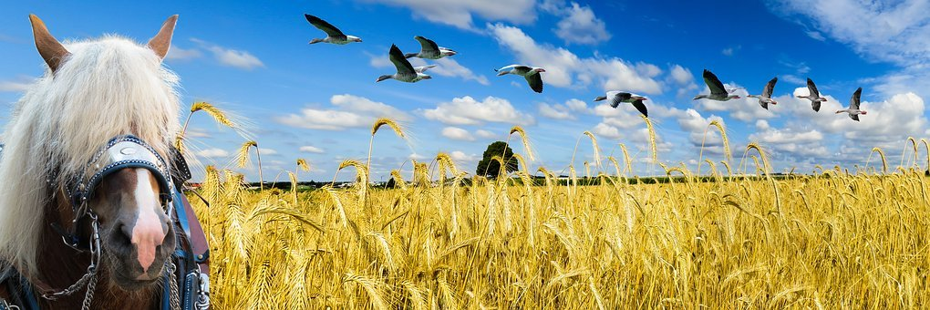 Nature, Landscape, Field, Sky, Wheat, Wheat Field