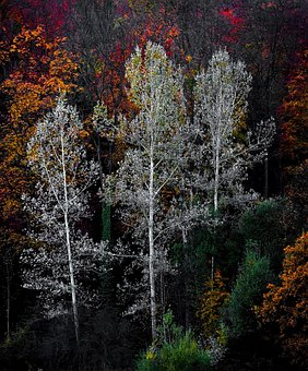 Colorful, Trees, Plants, Nature, Forests, Autumn