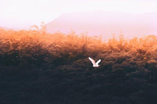 Trees, Bird, Flying, Nature, Sky, Cloud, Aesthetic