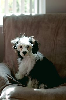 Dog, Puppy, Pet, Animal, Cute, Canine, White, Adorable