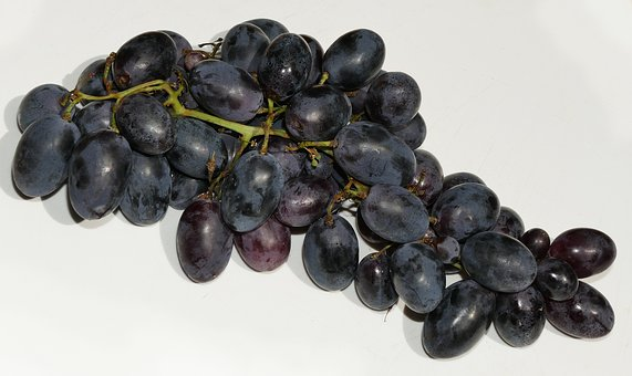 Grapes, Wine Berries, Panicle, Träubel, Vitis Vinifera