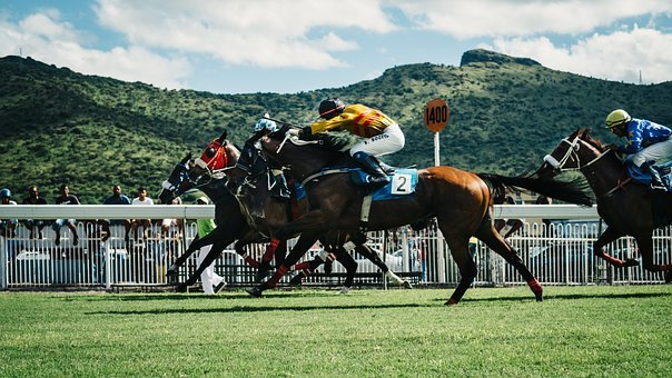 Green, Field, Grass, Animal, Horse, Racing, Sport, Game
