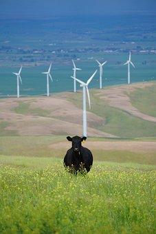 Green, Grass, Flowers, Cow, Cattle, Field, Highland