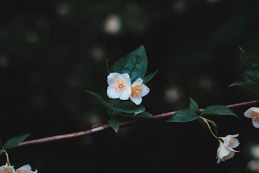 White, Flower, Green, Leaves, Nature, Plant, Dark