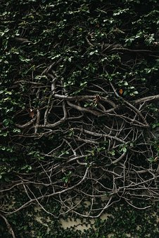 Green, Plants, Roots