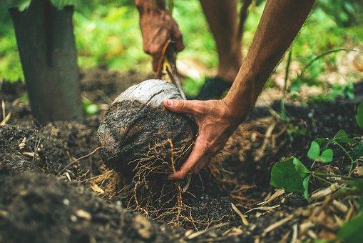 Soil, Land, Environment, Nature, Coconut, Plants, Roots