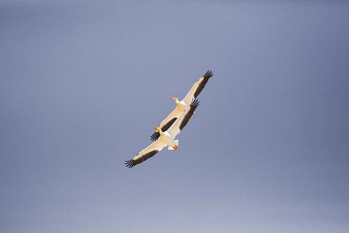 Seagull, Bird, Animal, Blue, Sky