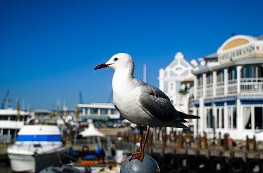 Bird, Blue, Sky, White, Beak, Nature, Gull, Sea