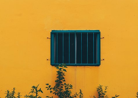 Yellow, Concrete, Wall, Plants