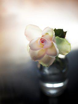 Rose, Roosje, Vase, Background, Pink, Flowers, Romantic