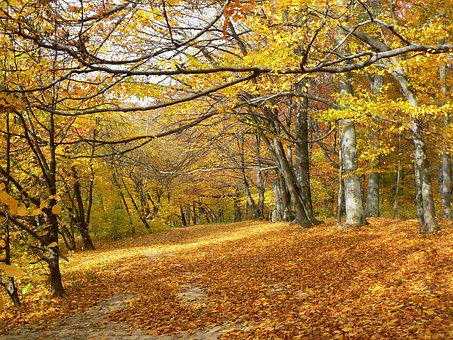 Autumn, Forest, Golden Autumn, Nature, Autumn Forest