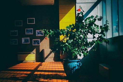 Architecture, Building, Indoor, Interior, Plants, House