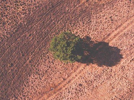Tree, Plant, Nature, Farm, Land, Field, Dry, Drought