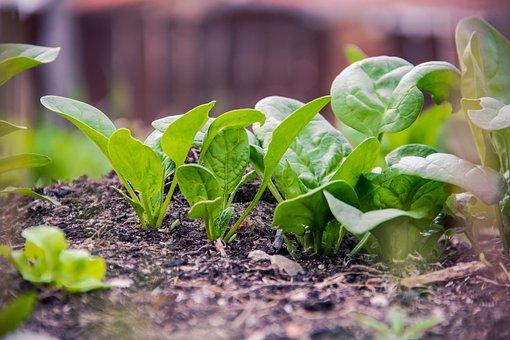 Green, Plan, Food, Vegan, Spinach, Planning, Eco
