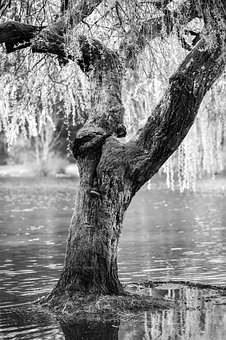 Black And White, River, Water, Tree, Plant, Nature