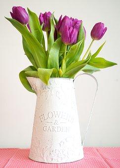 Violet, Tulip, Pitcher, Garden, Interior, Flower, Pink