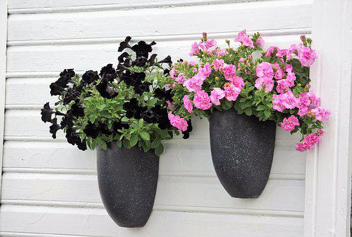 Black, Pink, Petunia, Flower, Decoration, Wall, Plant
