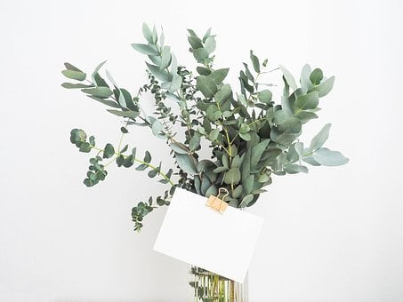 Green, Leaf, Plants, Interior, Flower, Glass, Water