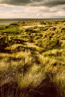 England, Great Britain, Landscape, Plants, Grass
