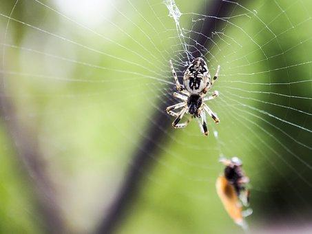 Spider, Nature, Macro, Cobweb, Summer, Spider's Web