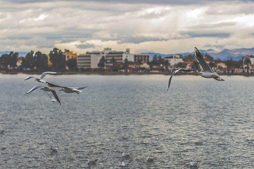Nature, Water, Animals, Birds, Community, Buildings