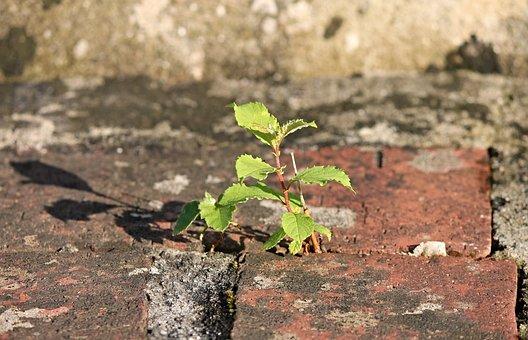 Plant, Stone, Wall, Mortar, Brick, Drive, Grow, Win