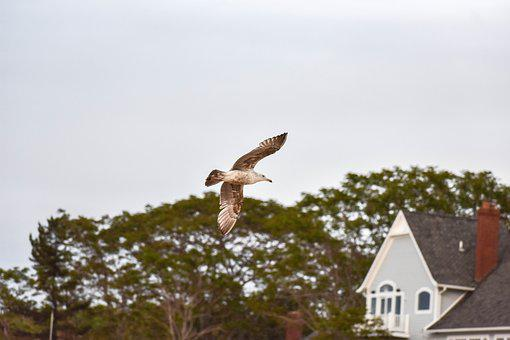 Seagull, House, Sand, Sunset, Costa, Blue, Sky
