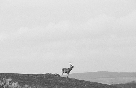 Deer, Animal, Wildlife, Peak, Mountain, Landscape
