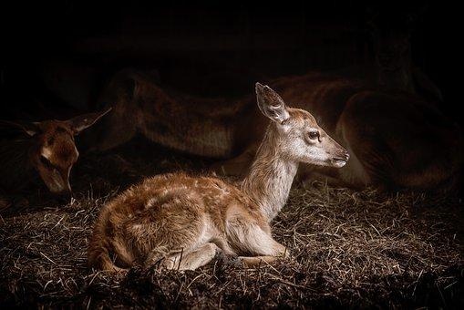 Nature, Hay, Animals, Deer