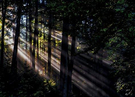 Green, Grass, Trees, Plant, Nature, Sunshine, Sunlight