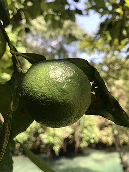Lime, Jamaica, Ocho, Rios