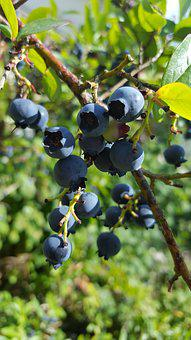 Blueberries, Soft Fruit, Summer Fruits, Harvest, Fruit
