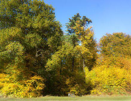 Früherbst, Edge Of The Woods, Outdoor, Nature, Bike