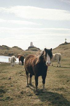 Sea, Water, Coast, Grass, Highland, Lighthouse, Travel