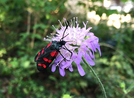 Beetle, Flower, Nature, Insect, Insects, Worms, Black
