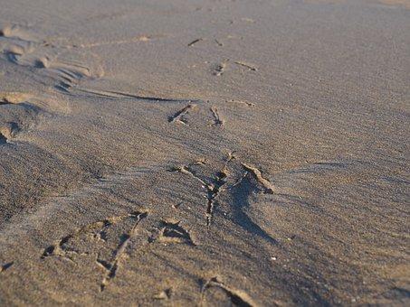 Bird Tracks, Sand, Bird, Traces, Animal Track, Reprint