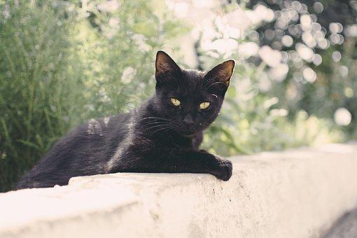 Cat, Animal, Kitten, Cute, Eyes, Whiskers