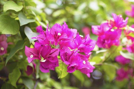 Flower, Pink, Garden, Pink Flowers, Nature, Floral