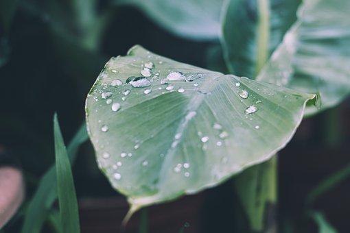 Rain, Drop Of Water, Raindrop, Leaf, Nature, Drip