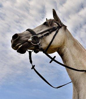 Horse, Mold, Pony, Low Angle Shot, Funny, Cute