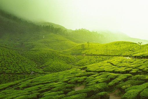Green, Trees, Farm, Field, Mountain, Plantation, Nature